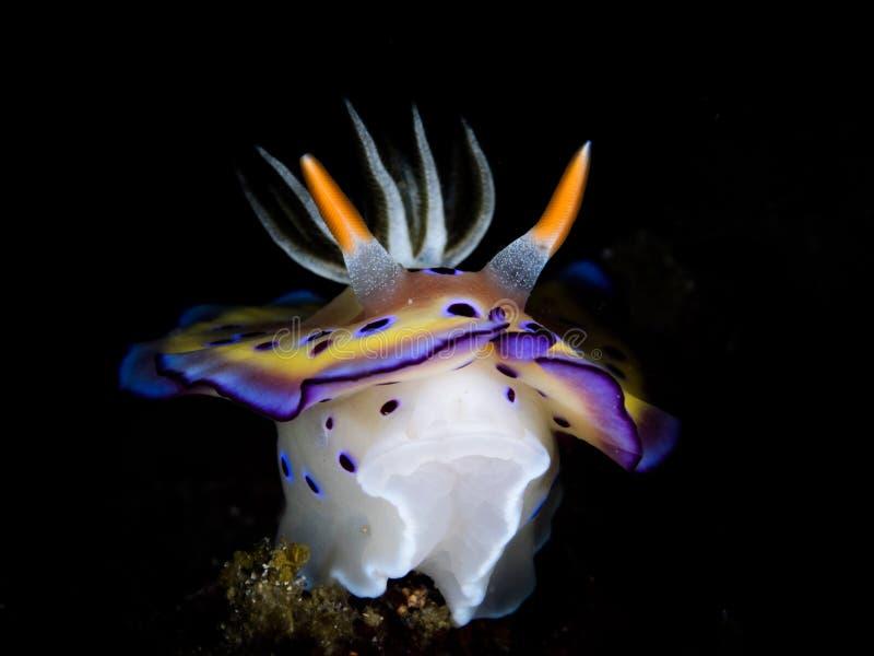 L'élégance de l'oceanlife profond photo libre de droits