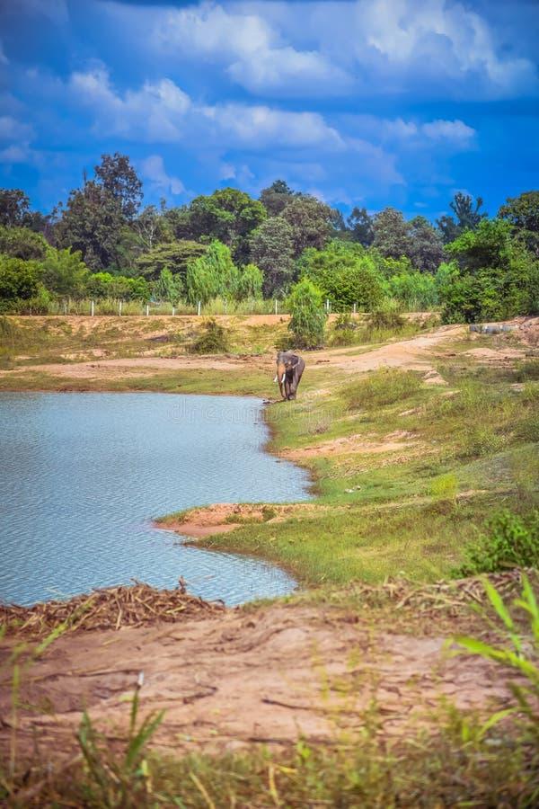 L'éléphant asiatique dans la nature Centre d'étude des éléphants Village d'éléphants en Thaïlande photographie stock libre de droits