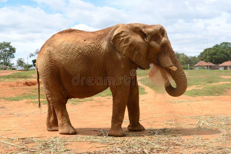 L'éléphant puissant prend une douche de sable image stock