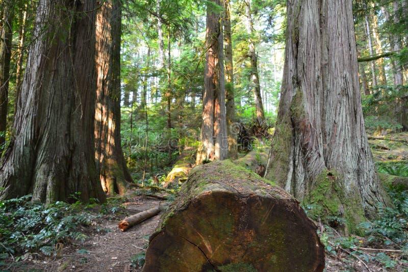 L'élan tombe parc provincial Campbell River photo libre de droits