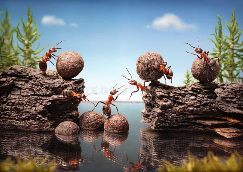 L'équipe de fourmis fonctionnent construisant le barrage, travail d'équipe photographie stock libre de droits