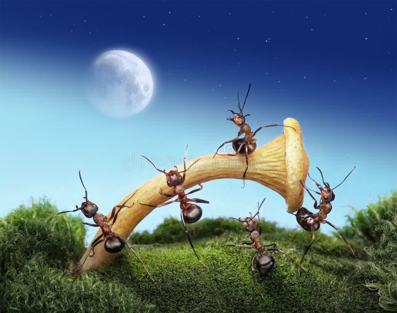 L'équipe des fourmis lance l'astronaute à la lune photos stock