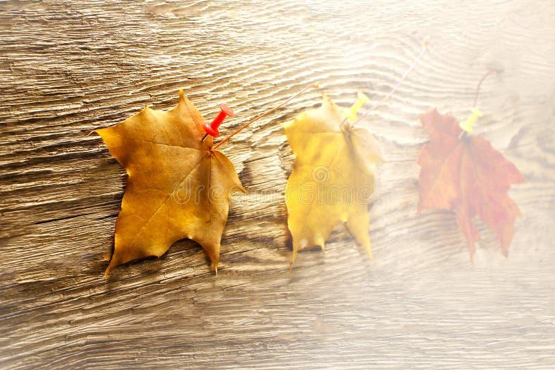 L'érable d'automne laisse le clipart sur la table en bois Fond naturel en baisse de feuilles toned image stock