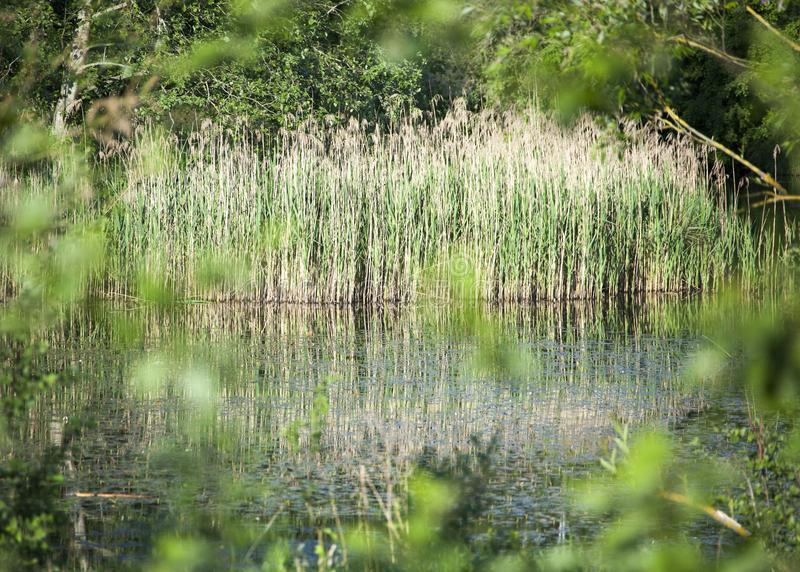 L'étang caché photographie stock