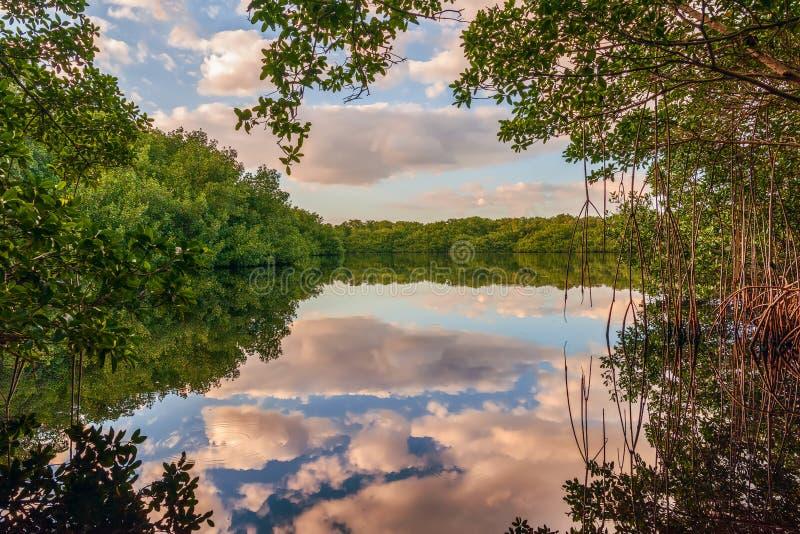 L'étang de Coot Bay dans le parc national des Everglades. Floride. États-Unis images stock