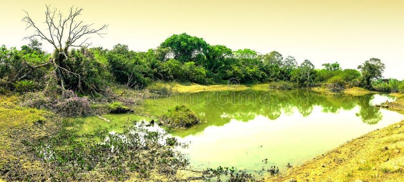 L'étang de l'eau saline connu sous le nom de salines font Pantanal images libres de droits