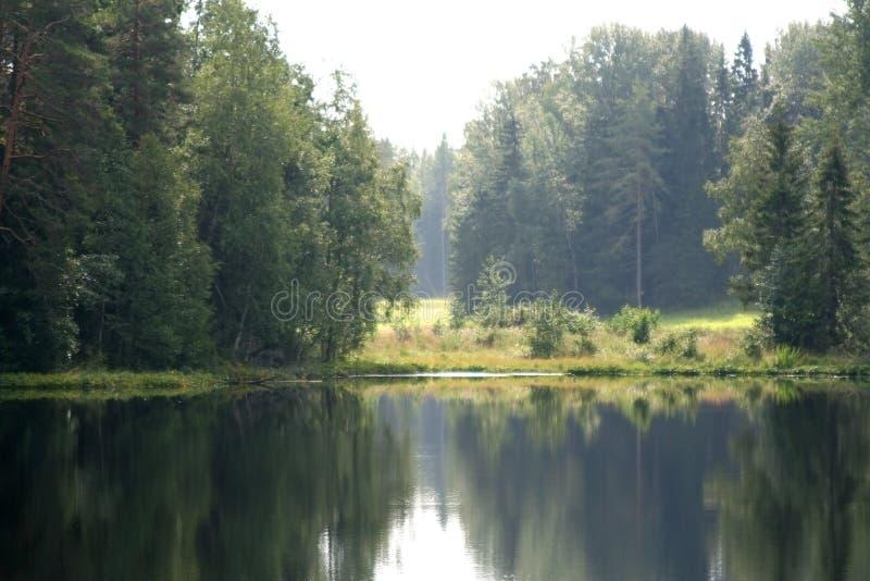 L'étang de forêt image stock