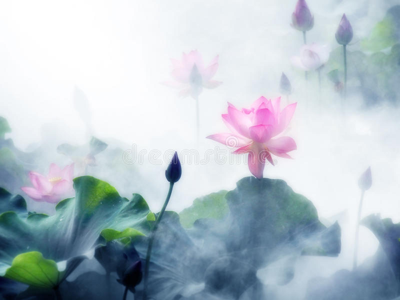 L'étang de lotus brumeux de matin images stock