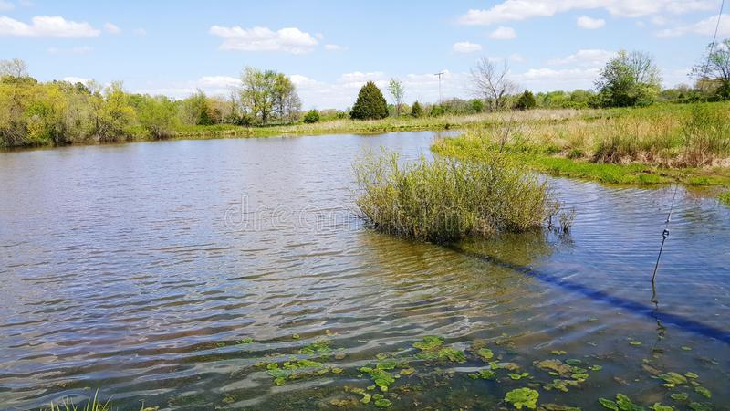L'étang herbeux photos stock
