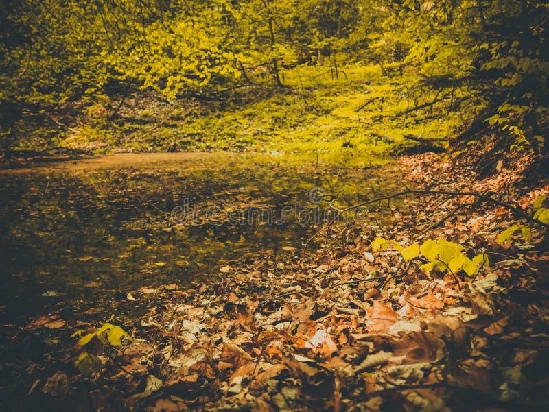 L'étang a lieu en automne baigné dans des feuilles colorées images libres de droits
