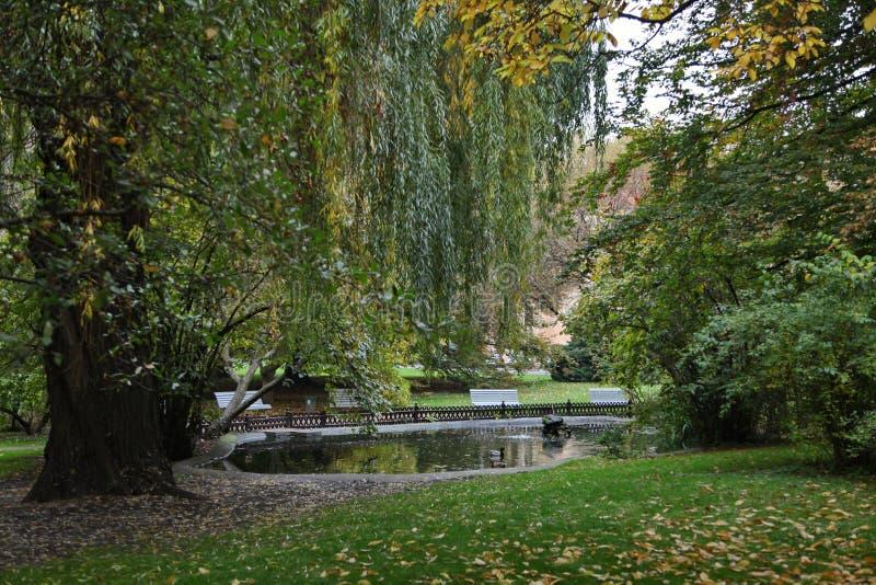 L'étang ombragé avec des canards et les carpes de poissons en automne se garent photo stock