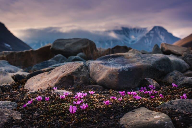 L'étoile arctique polaire de ciel d'aurora borealis de lumières du nord en Norvège le Svalbard en montagnes de lune de ville de L photos stock