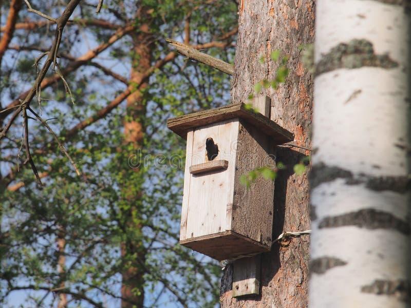 L'étourneau regarde hors de la volière L'oiseau sur le nid photos stock