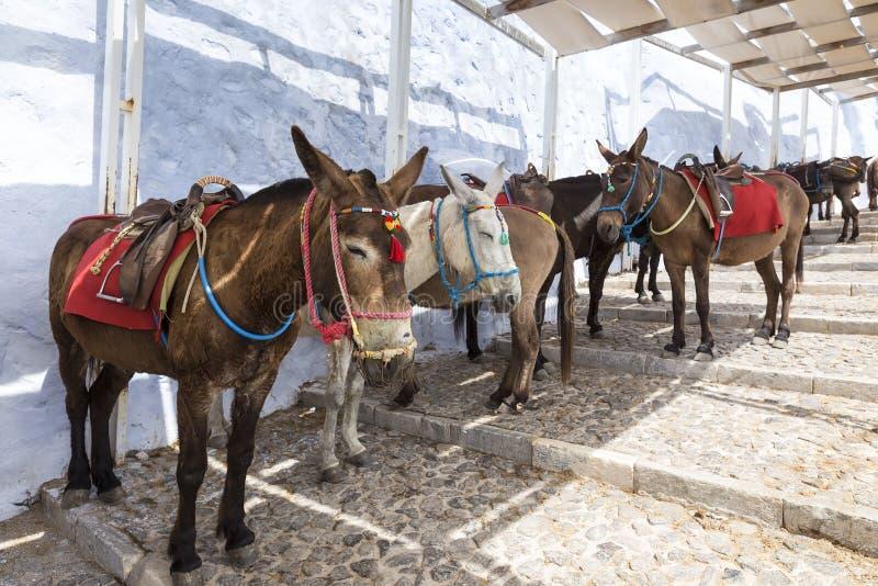 L'île de la Grèce Santorini dans des ânes de Cyclades des îles sont u photographie stock