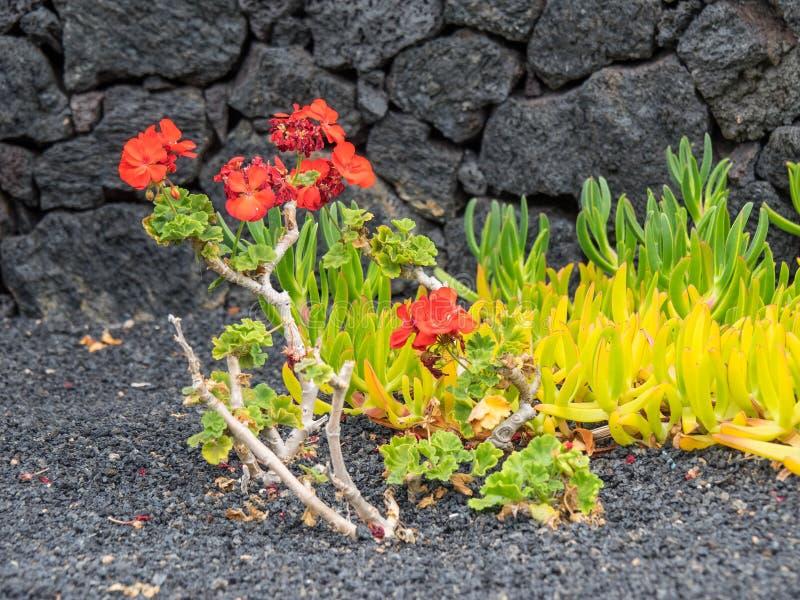 L'île de Lanzarote photo libre de droits