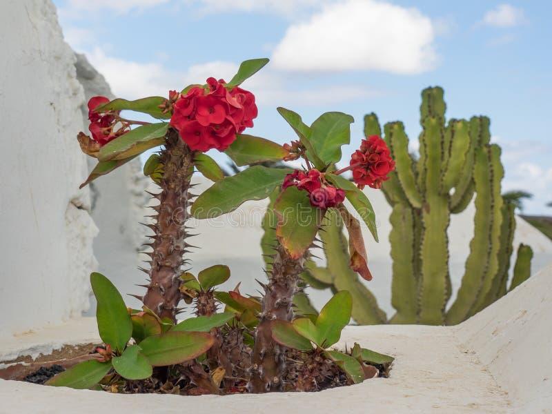 L'île de Lanzarote photos libres de droits