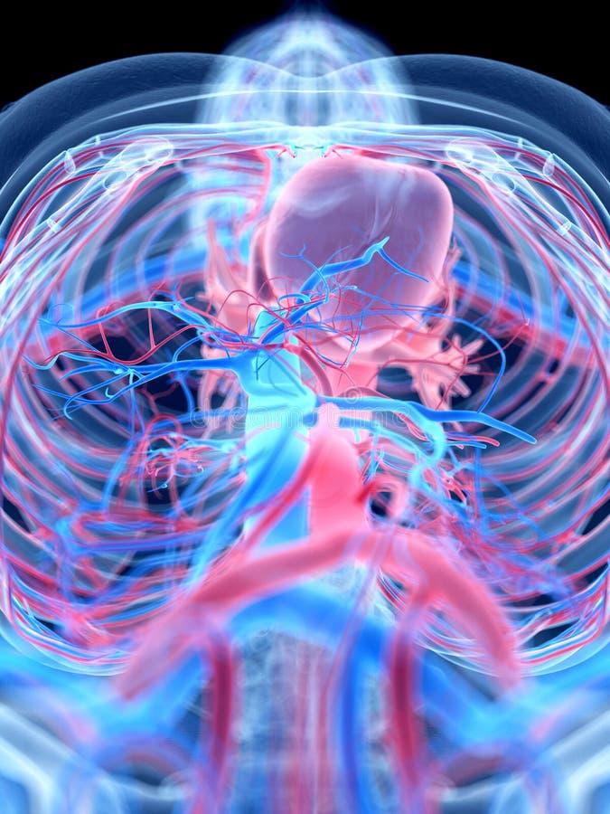L'abdomen illustration de vecteur