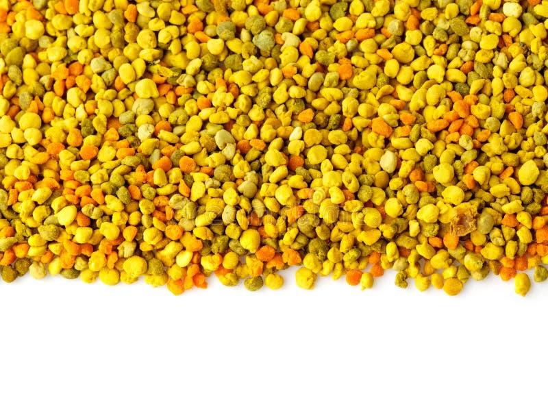 L'abeille a recueilli des granules de pollen images stock