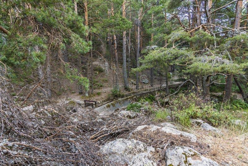 L'abetaia ed il canale idrico con il portone in un posto hanno chiamato La Barranca nella sierra de Guadarrama Madrid Spagna fotografie stock libere da diritti