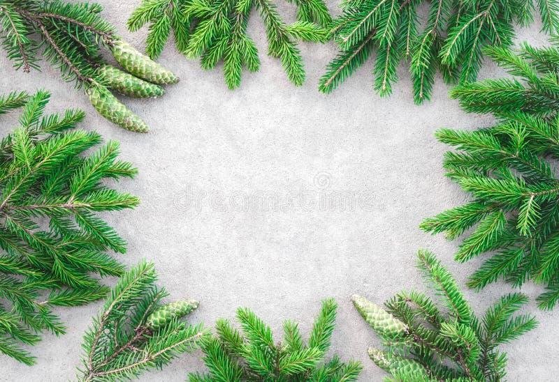 L'abete verde si ramifica struttura immagini stock libere da diritti