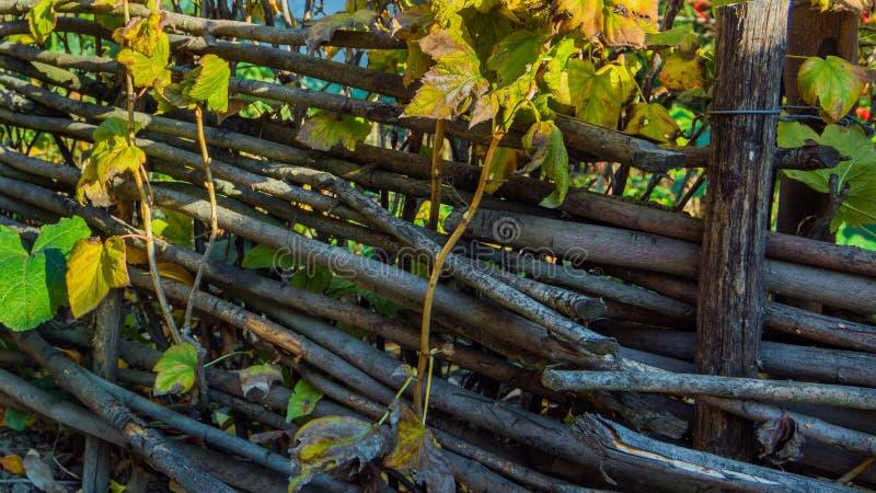 L'acacia di legno recinta il giardino di autunno - fondo astratto immagine stock libera da diritti