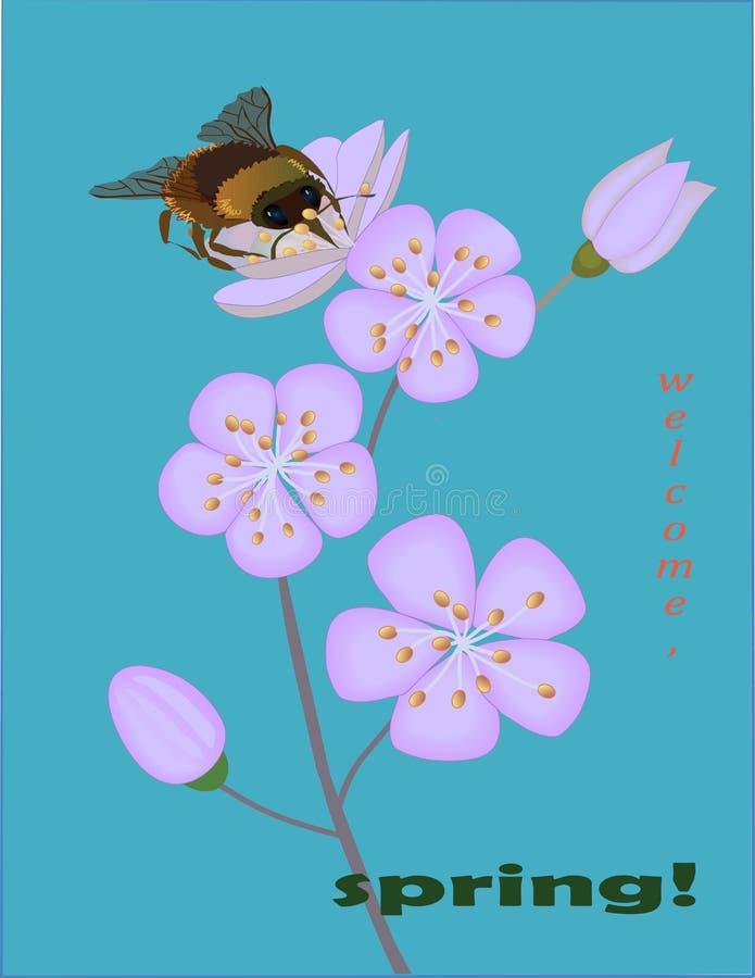 L'accueil, arbres de ressort sont en fleur et les incects commencent leur travail illustration stock