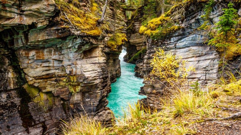 L'acqua colorata turchese del fiume di Athabasca come attraversa il canyon fotografia stock