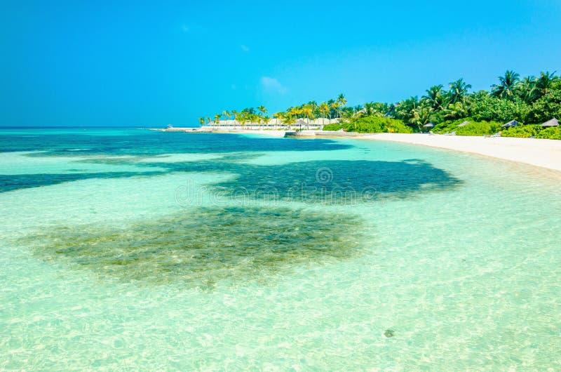 L'acqua dell'oceano del turchese ed il bello paradiso tirano con le palme alte con cielo blu immagine stock