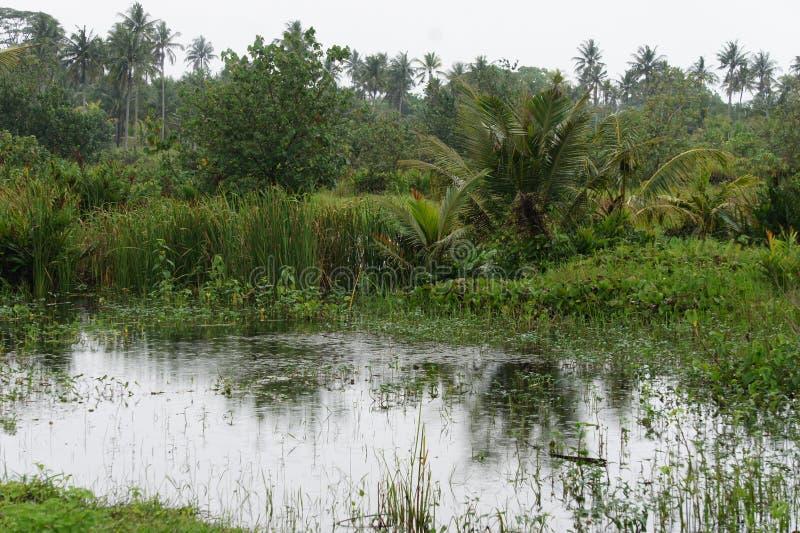 L'acqua dopo le pioggie lunghe nei tropici sull'isola di Java, Indonesia fotografie stock