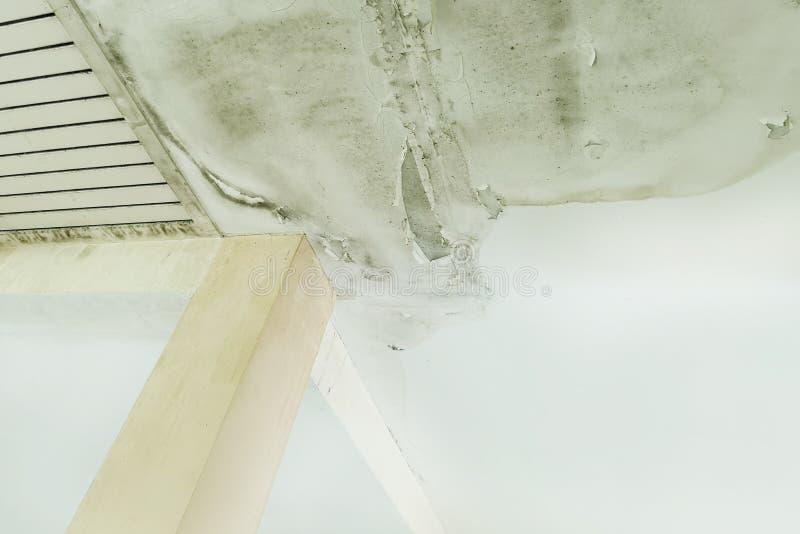 L'acqua piovana cola sul soffitto che causa il danno, le mattonelle ed il bordo di gesso immagini stock libere da diritti