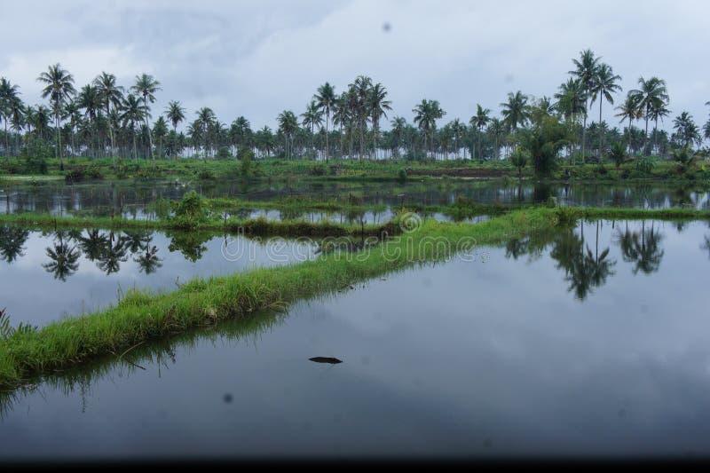 L'acqua piovana ha sommerso le pianure nella zona centrale dell'Indonesia fotografie stock