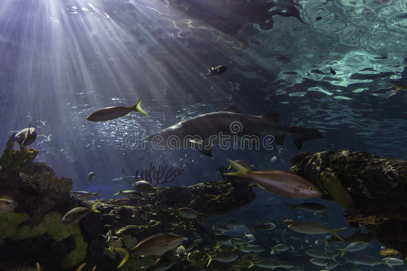 L'acquario di Ripleys - Toronto, Ontario immagine stock