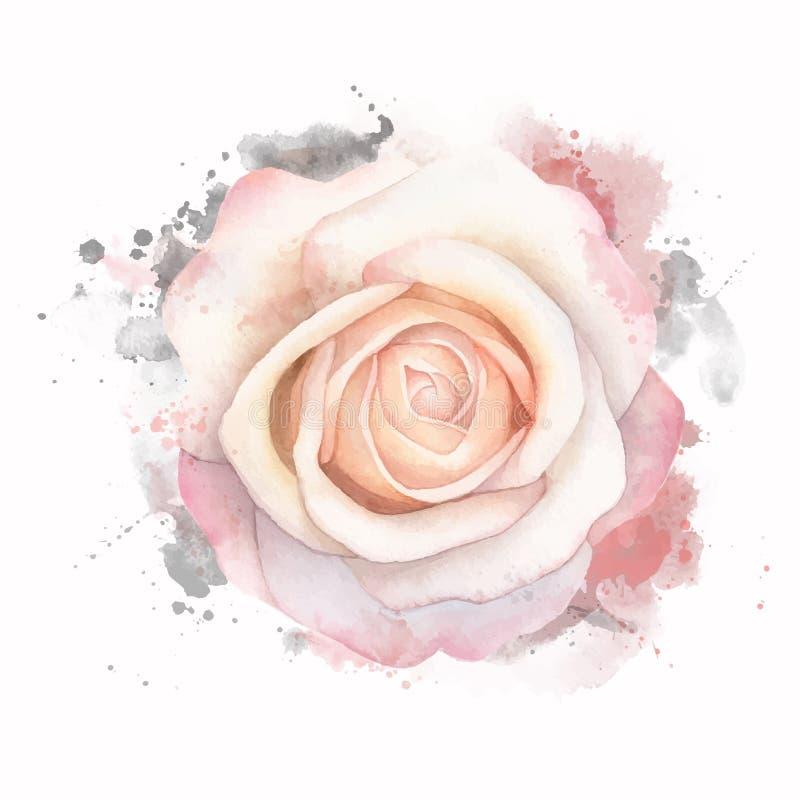 L'acquerello astratto è aumentato su fondo bianco Illustrazione della pittura di lerciume dell'acquerello royalty illustrazione gratis