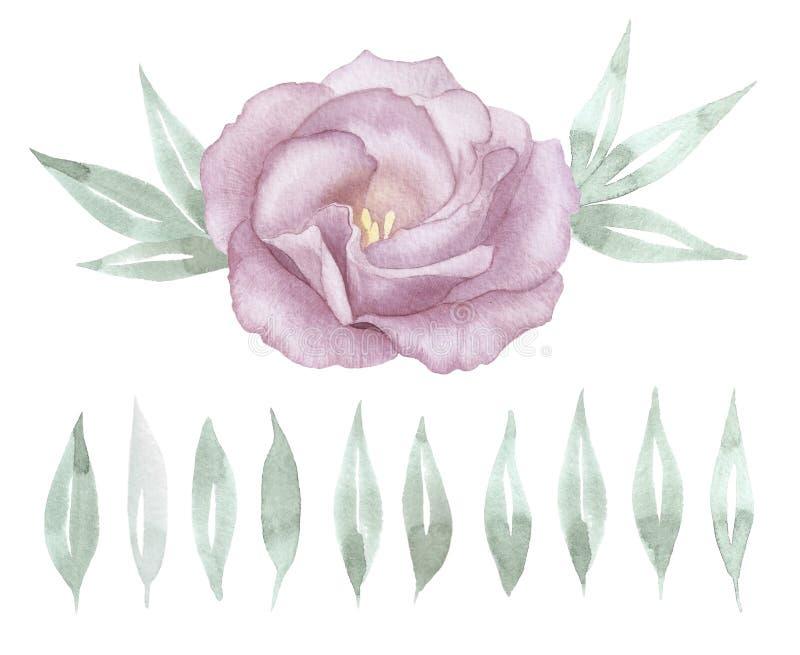 L'acquerello rosa è aumentato Insieme disegnato a mano verde delle foglie Illustrazione botanica Scheda di disegno floreale illustrazione di stock