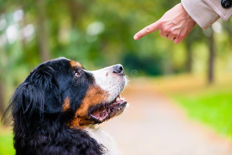 L'addestramento della donna con il cane si siede il comando fotografie stock libere da diritti