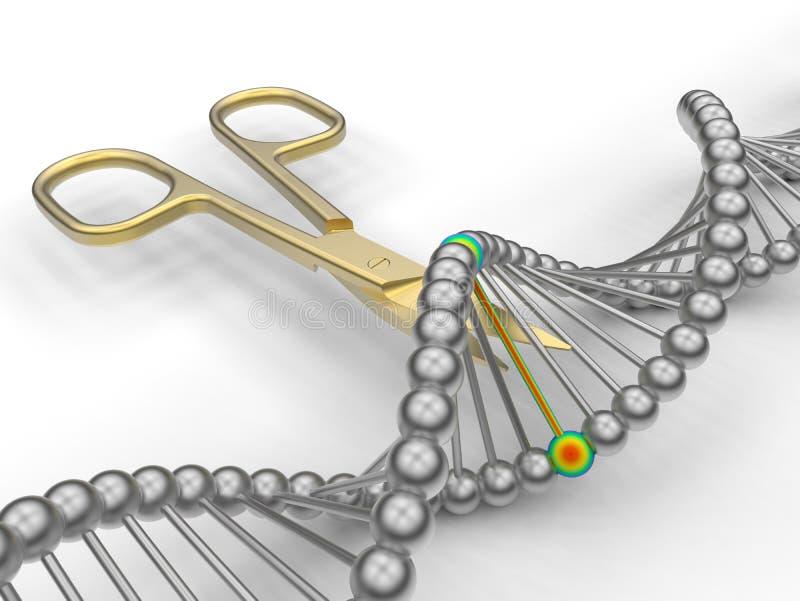 L'ADN d'or a coupé - viser un lien spécifique illustration libre de droits