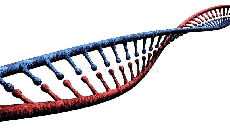 L'ADN est une chaîne comme un fil des nucléotides portant les instructions génétiques utilisées dans la croissance, le développem illustration libre de droits
