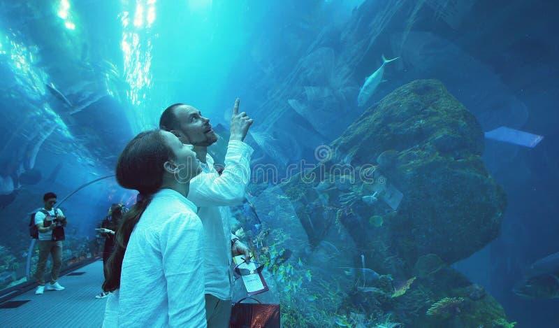 L'adolescente avec le papa admirent l'espèce marine dans le tunnel en verre de l'aquarium dans le mail de Dubaï photo libre de droits