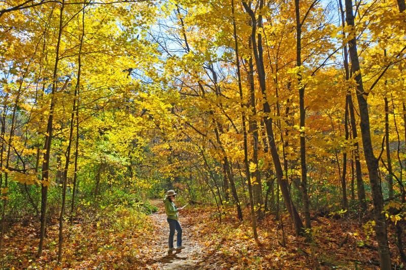 L'affichage de la carte l'automne colore la hausse images stock