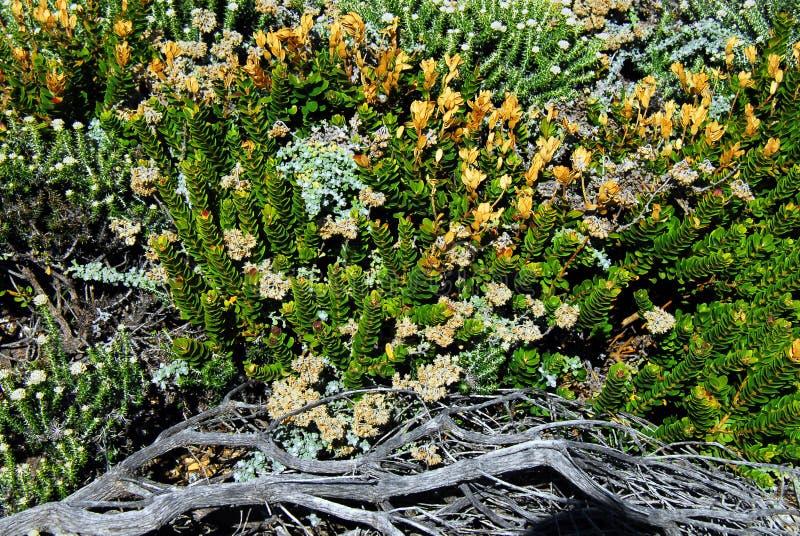 L'Afrique une collection de fleurs sauvages et de plantes s'élevant dans Rooi photographie stock libre de droits