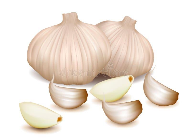 L'aglio ha impostato sui precedenti bianchi illustrazione di stock