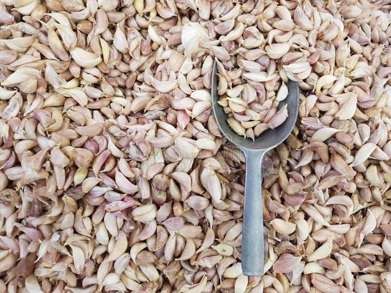 L'aglio organico fresco ha proprietà: Nutrendo la pelle per essere sano, contribuisca a rinforzare la crescita dei tessuti nel co immagine stock