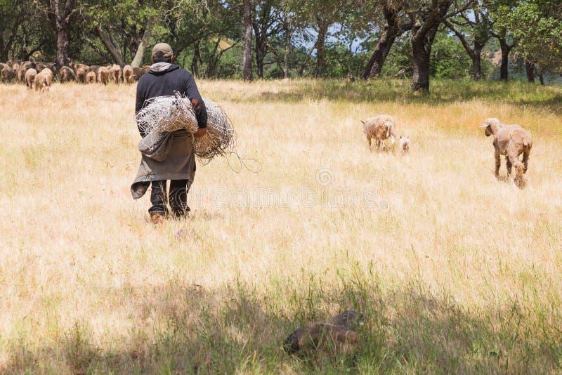 L'agneau de bébé suit la mère vers le pré images libres de droits