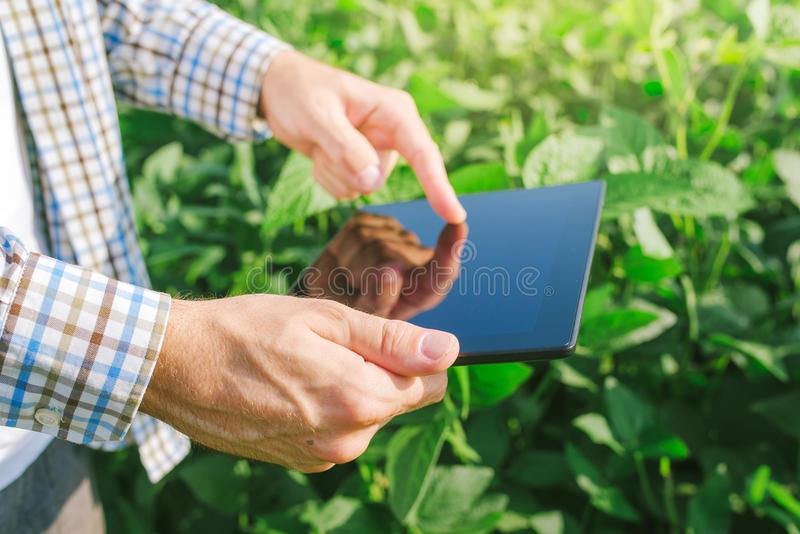 L'agricoltore che utilizza il computer digitale della compressa nella soia coltivata pota fotografie stock libere da diritti