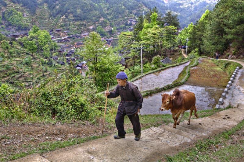 L'agricoltore cinese aumenta su percorso della montagna, tenente il bufalo di rosso delle redini fotografie stock