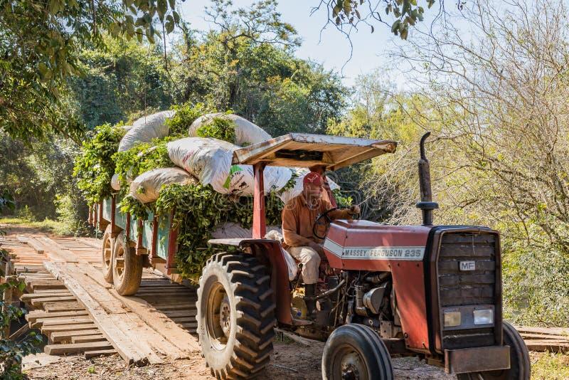 L'agricoltore con il trattore nel Paraguay guida sopra un ponte di legno di bobina immagine stock libera da diritti