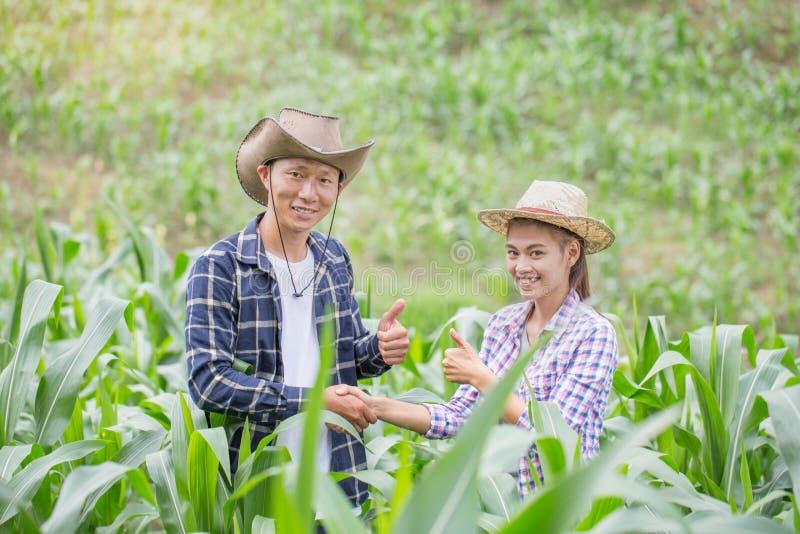 L'agricoltore due che sta e che stringe le mani al cereale coltiva, concetto o immagini stock libere da diritti