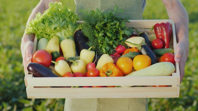 L'agricoltore sta tenendo una scatola di legno con un insieme di varie verdure Agricoltura biologica e prodotti di fattoria immagini stock libere da diritti