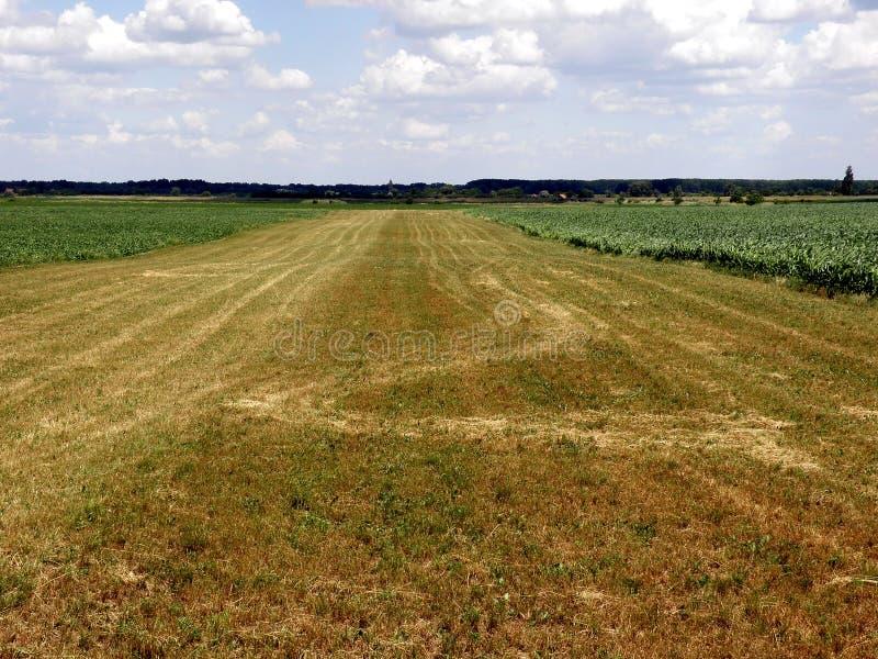 L'agricoltura ha raccolto il giacimento di grano fotografia stock