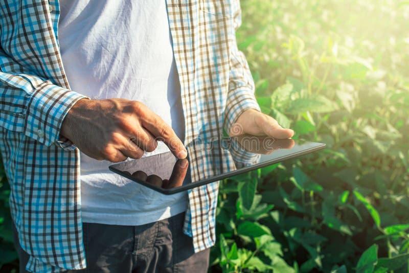 L'agriculteur à l'aide de la tablette numérique en soja cultivé cultive images libres de droits